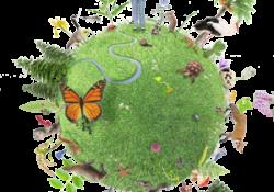 Biodiversité: le Sénat adopte le projet de loi en première lecture